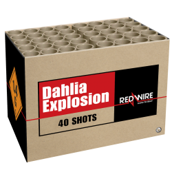 Lesli Dahlia Explosion